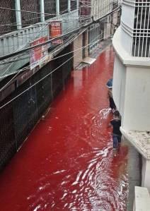 dhaka__-blood_moss_091316091322-1